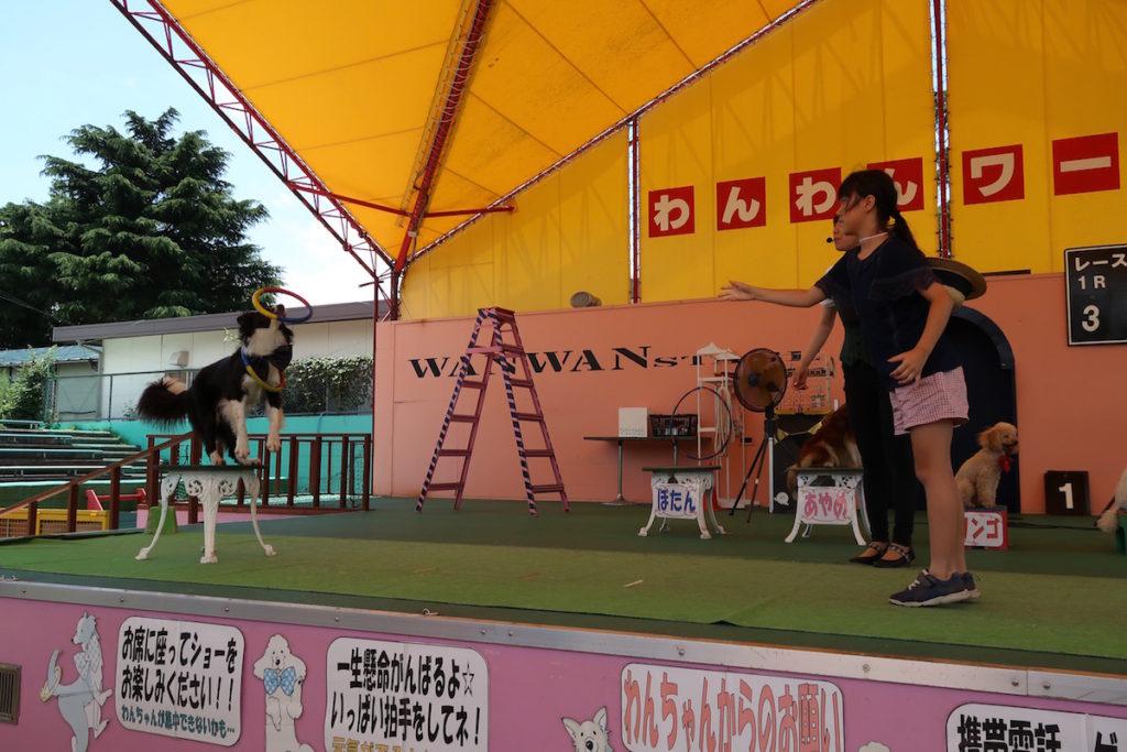 wan wan land tsukuba 7