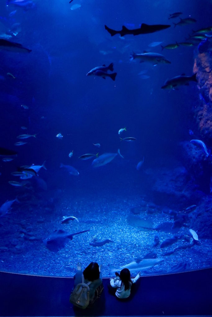 enoshima-aquarium-11