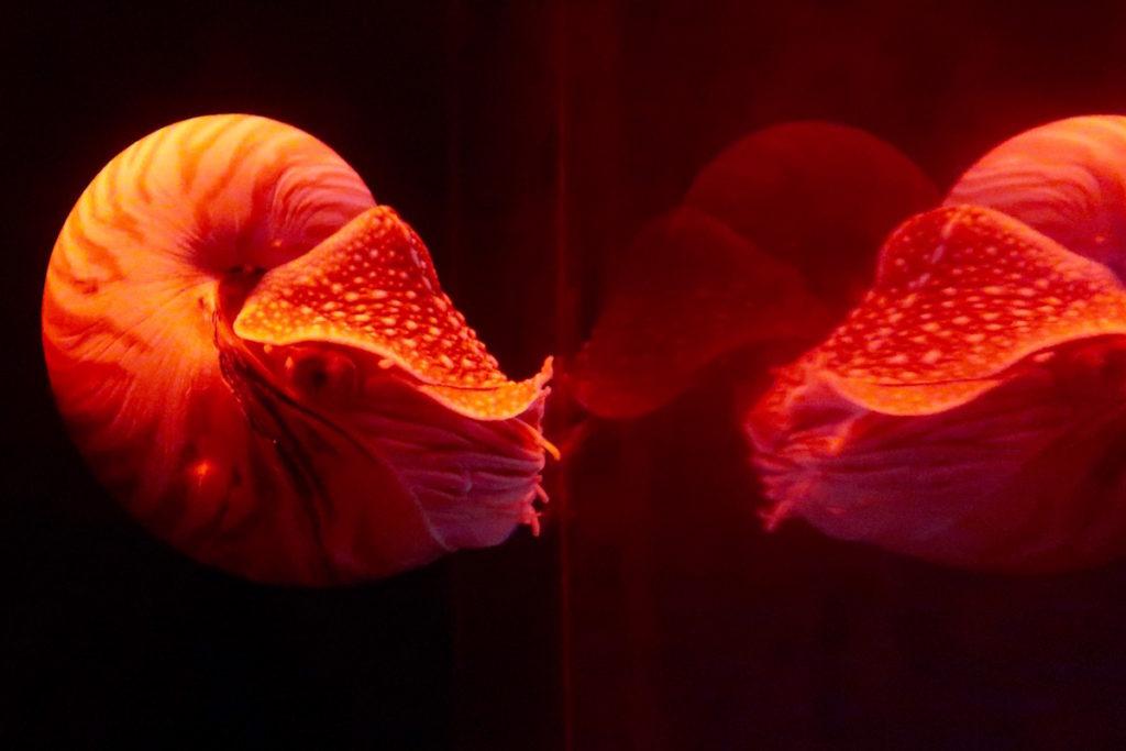 enoshima-aquarium-13