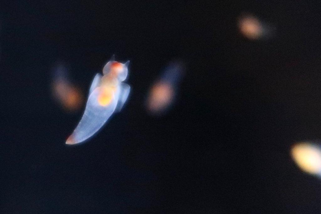 enoshima-aquarium-15