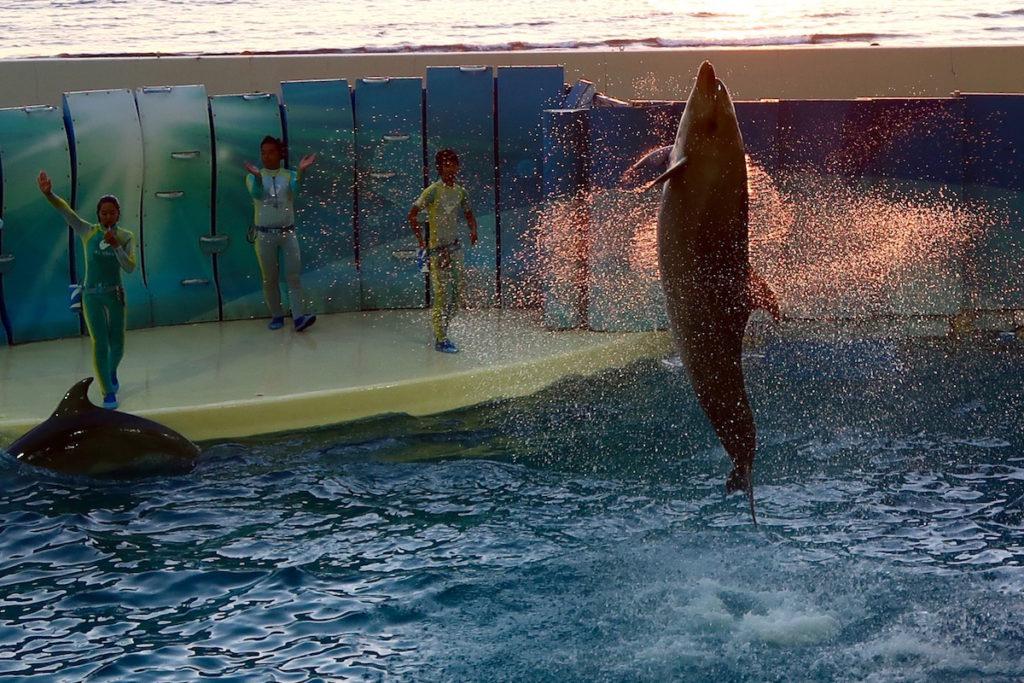 enoshima-aquarium-5
