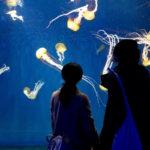 enoshima-aquarium-9